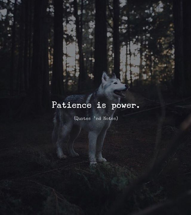 LIFE QUOTES : Patience Is Power. U2014via Http://ift.tt/2eY7hg4