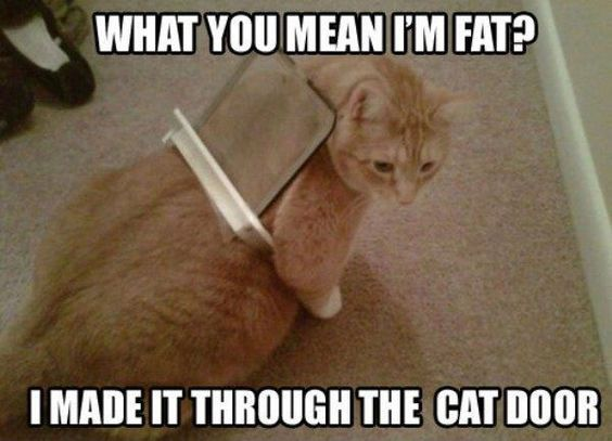 Best Funny Quotes : 30 Really Hilarious Cat Pics - Top ...
