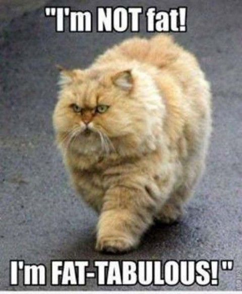 Best Funny Quotes : 30 Really Hilarious Cat Pics #funny cats ...